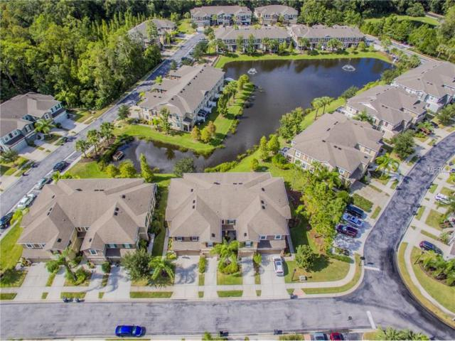 12528 Shirebrook Court, Tampa, FL 33626 (MLS #T2905286) :: Griffin Group