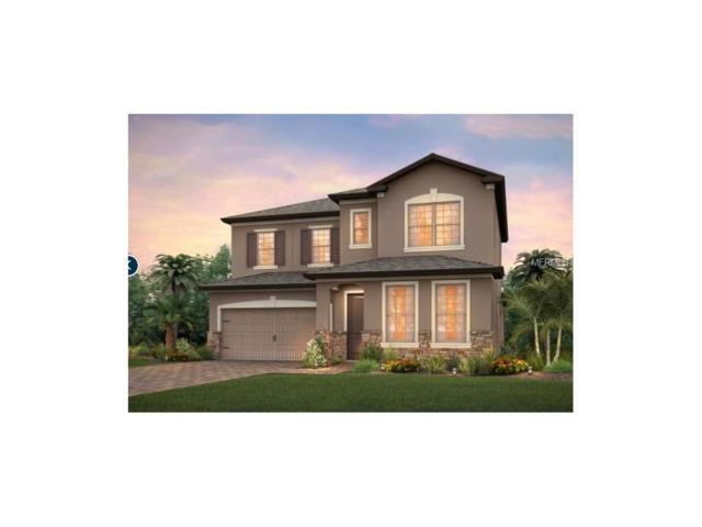 18734 Birchwood Groves Drive, Lutz, FL 33558 (MLS #T2908087) :: Team Bohannon Keller Williams, Tampa Properties