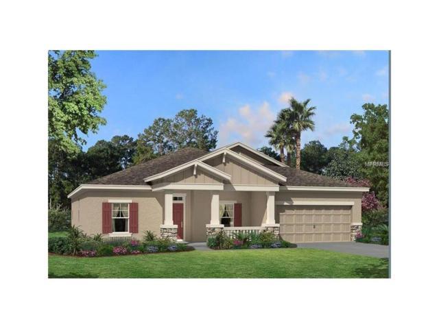8202 Bluevine Sky Drive, Land O Lakes, FL 34637 (MLS #T2909841) :: Team Bohannon Keller Williams, Tampa Properties