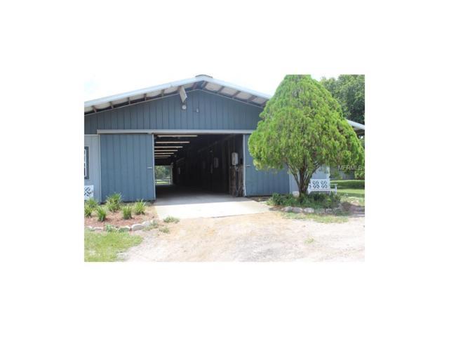 3007C Sunset Lane, Lutz, FL 33559 (MLS #T2914449) :: Griffin Group