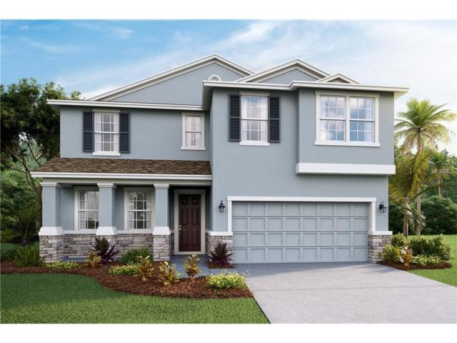 11536 Storywood Drive, Riverview, FL 33578 (MLS #T2914711) :: Delgado Home Team at Keller Williams