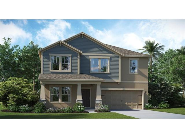 10210 Lovegrass Lane, Orlando, FL 32832 (MLS #T2914897) :: Godwin Realty Group