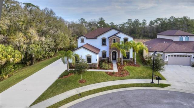 20005 Heron Crossing Drive, Tampa, FL 33647 (MLS #T2930021) :: Team Bohannon Keller Williams, Tampa Properties