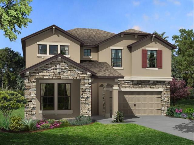 10440 Arbor Groves Place, Riverview, FL 33578 (MLS #T2930913) :: Dalton Wade Real Estate Group