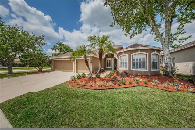 10415 Brentford Drive, Tampa, FL 33626 (MLS #T3102375) :: Cartwright Realty
