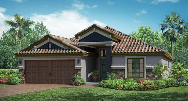 13180 Green Violet Drive, Riverview, FL 33579 (MLS #T3102678) :: The Duncan Duo Team