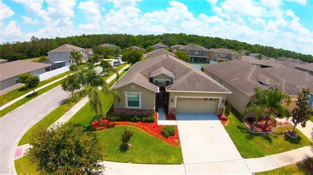 20433 Carolina Cherry Court, Tampa, FL 33647 (MLS #T3102713) :: Cartwright Realty