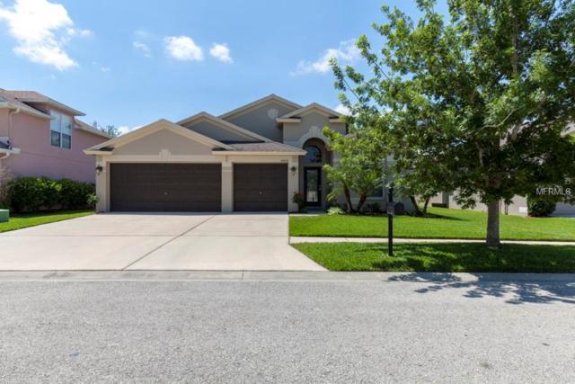 34434 Windknob Court, Wesley Chapel, FL 33545 (MLS #T3103187) :: Griffin Group