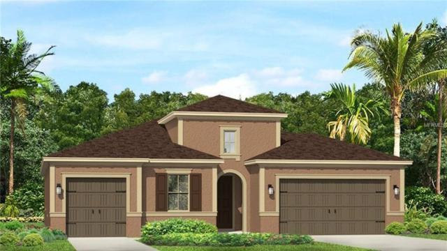 18227 Leafmore Street, Lutz, FL 33548 (MLS #T3108180) :: The Duncan Duo Team