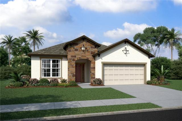 5250 Turtle Bay Drive #3125, Wesley Chapel, FL 33545 (MLS #T3112446) :: The Duncan Duo Team