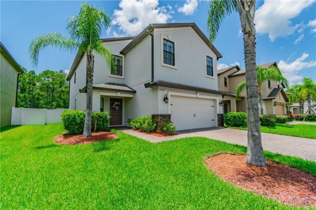 20030 Date Palm Way, Tampa, FL 33647 (MLS #T3113146) :: The Lockhart Team