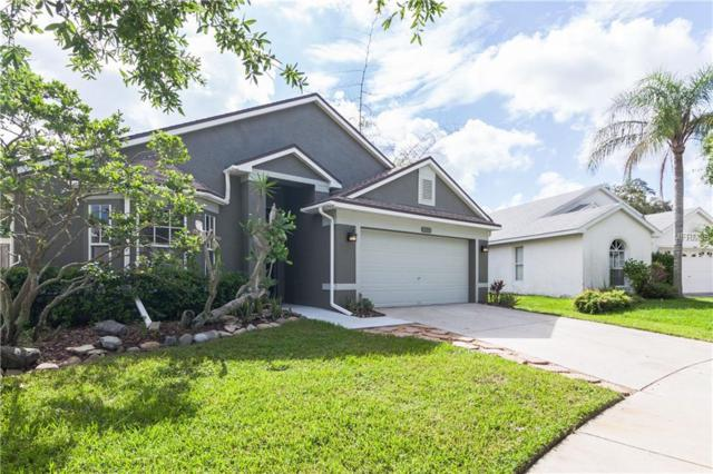 5658 Tughill Drive, Tampa, FL 33624 (MLS #T3113587) :: Team Bohannon Keller Williams, Tampa Properties