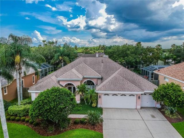 11912 Keating Drive, Tampa, FL 33626 (MLS #T3113741) :: Cartwright Realty