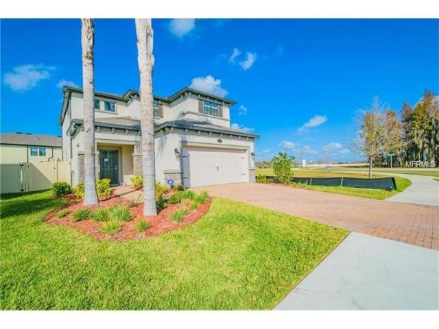 1999 Nature View Drive, Lutz, FL 33558 (MLS #T3115558) :: The Duncan Duo Team