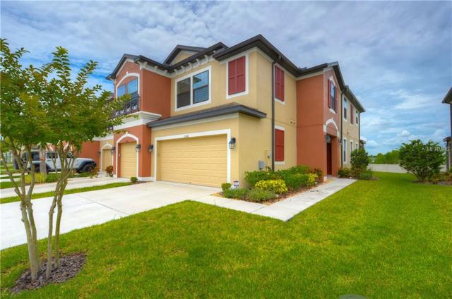 11556 Crowned Sparrow Lane, Tampa, FL 33626 (MLS #T3116039) :: The Duncan Duo Team