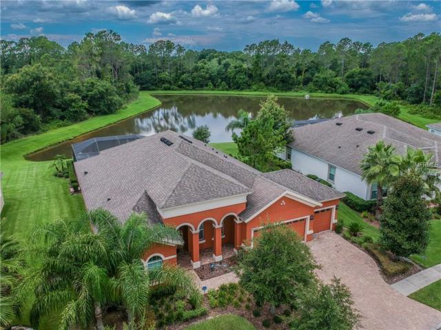 32100 Summerglade Drive, Wesley Chapel, FL 33545 (MLS #T3118486) :: Team Bohannon Keller Williams, Tampa Properties