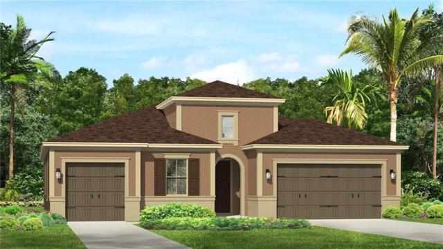 31935 Bourneville Terrace, Wesley Chapel, FL 33543 (MLS #T3120774) :: The Light Team