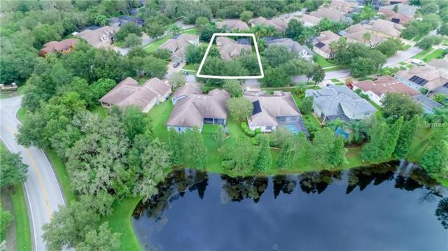 15706 Ibisridge Drive, Lithia, FL 33547 (MLS #T3122372) :: The Duncan Duo Team