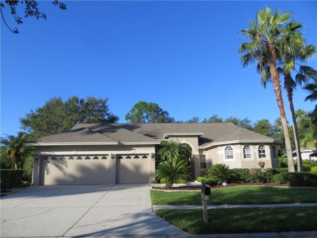 19137 Wind Dancer Street, Lutz, FL 33558 (MLS #T3123939) :: Team Bohannon Keller Williams, Tampa Properties