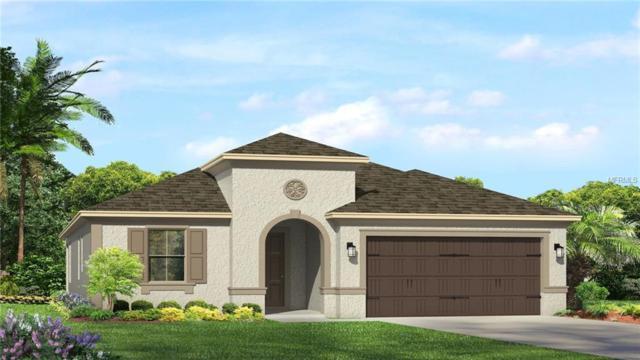 28897 Lucero Lane, Wesley Chapel, FL 33543 (MLS #T3125406) :: Team Bohannon Keller Williams, Tampa Properties