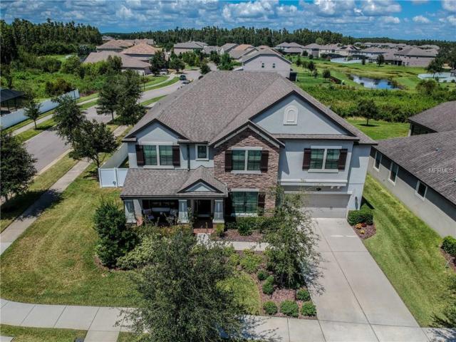 10526 Mistflower Lane, Tampa, FL 33647 (MLS #T3128794) :: Team Bohannon Keller Williams, Tampa Properties