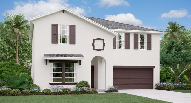 10247 Strawberry Tetra Drive, Riverview, FL 33578 (MLS #T3129144) :: The Duncan Duo Team