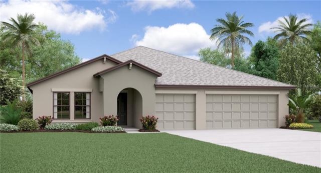 14016 Arbor Pines Drive, Riverview, FL 33579 (MLS #T3130446) :: The Light Team