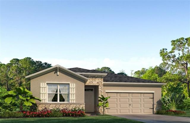 31709 Tansy Bend, Wesley Chapel, FL 33545 (MLS #T3132803) :: The Light Team