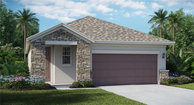 9669 Ivory Drive, Ruskin, FL 33573 (MLS #T3136420) :: The Duncan Duo Team