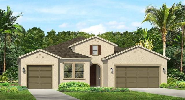1819 Whitewillow Drive, Wesley Chapel, FL 33543 (MLS #T3136706) :: The Light Team