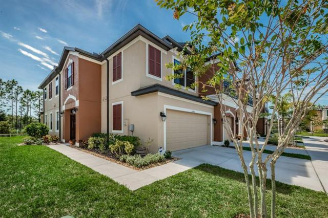 11450 Crowned Sparrow Lane, Tampa, FL 33626 (MLS #T3138320) :: The Duncan Duo Team