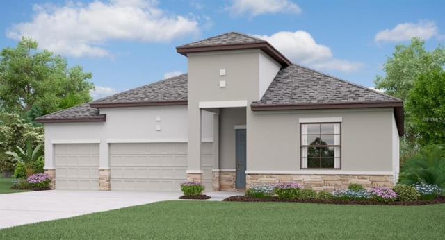 13611 White Sapphire Road, Riverview, FL 33579 (MLS #T3139285) :: The Duncan Duo Team