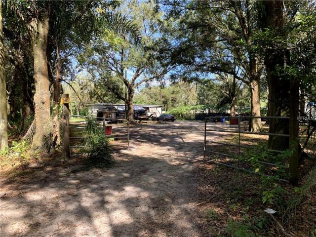 229 Marge Owens Road, Dover, FL 33527 (MLS #T3139566) :: Mark and Joni Coulter | Better Homes and Gardens