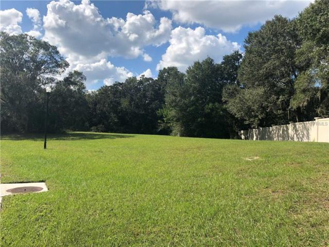 17044 Comunidad De Avila, Lutz, FL 33548 (MLS #T3140942) :: Mark and Joni Coulter | Better Homes and Gardens