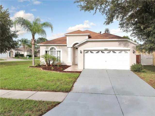 18202 Holly Hills Way, Tampa, FL 33647 (MLS #T3141674) :: Lovitch Realty Group, LLC