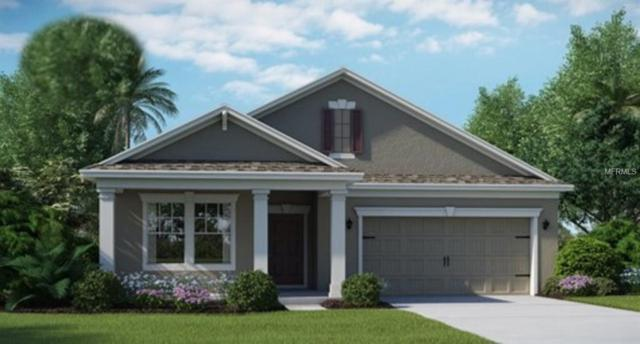 11126 Cyrilla Woods Drive, Orlando, FL 32832 (MLS #T3142081) :: Griffin Group
