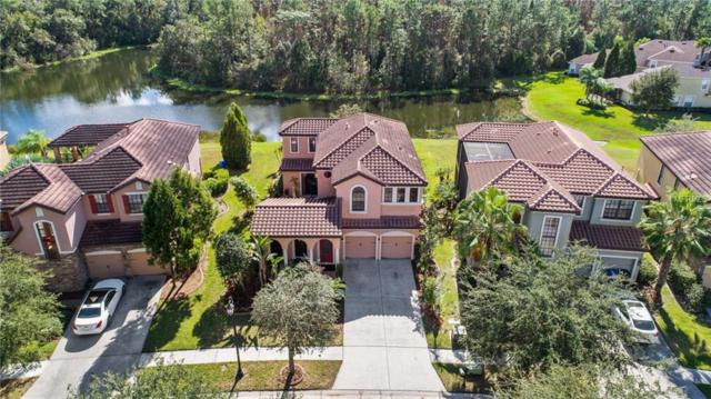 20321 Chestnut Grove Drive, Tampa, FL 33647 (MLS #T3142271) :: Team Bohannon Keller Williams, Tampa Properties