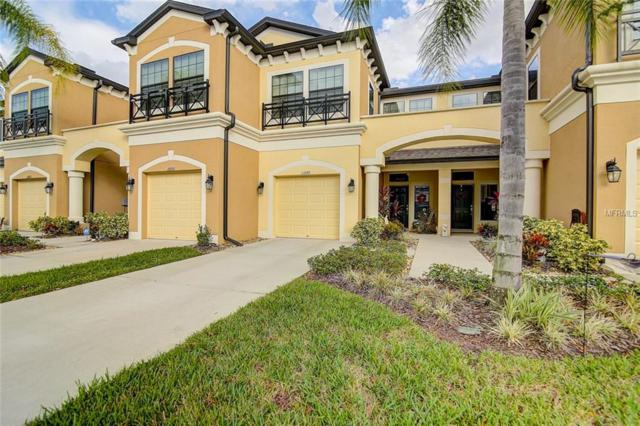 11649 Crowned Sparrow Lane, Tampa, FL 33626 (MLS #T3142442) :: Zarghami Group