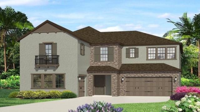 28586 Marsciano Lane, Wesley Chapel, FL 33543 (MLS #T3143184) :: Team Bohannon Keller Williams, Tampa Properties