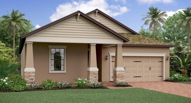 6233 English Hollow Road, Tampa, FL 33647 (MLS #T3145597) :: The Duncan Duo Team