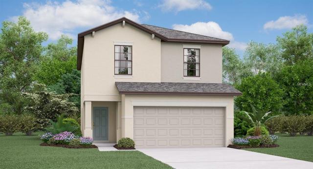 4010 Cat Mint Street, Tampa, FL 33619 (MLS #T3145882) :: Medway Realty