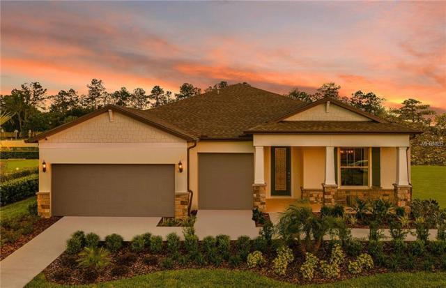 7756 Yale Harbor Drive, Wesley Chapel, FL 33545 (MLS #T3151925) :: Team Bohannon Keller Williams, Tampa Properties
