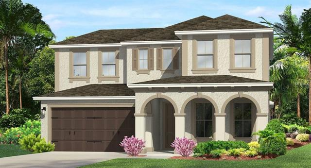 28738 Lucero Lane, Wesley Chapel, FL 33543 (MLS #T3152730) :: Team Bohannon Keller Williams, Tampa Properties