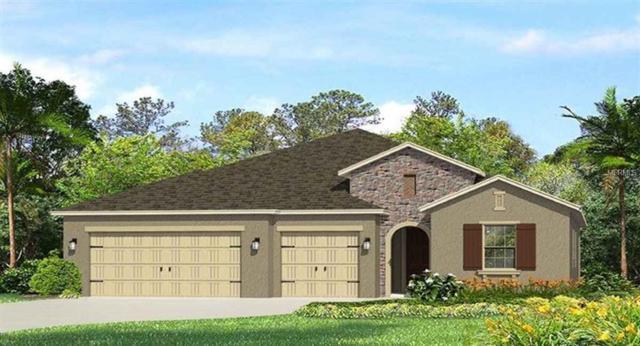 18306 Leafmore Street, Lutz, FL 33548 (MLS #T3153261) :: Team Suzy Kolaz