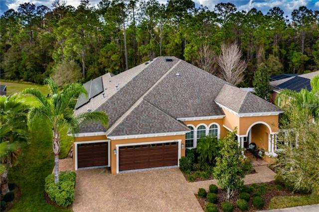 20212 Oak Thorn Way, Tampa, FL 33647 (MLS #T3157900) :: Team Bohannon Keller Williams, Tampa Properties
