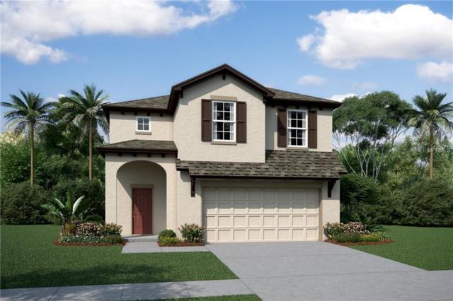5431 Little Stream Lane #3115, Wesley Chapel, FL 33545 (MLS #T3158546) :: The Figueroa Team