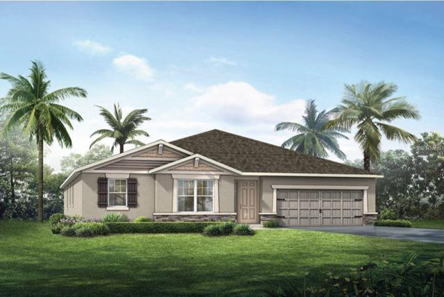11506 Blue Woods Drive #117, Riverview, FL 33578 (MLS #T3159812) :: Jeff Borham & Associates at Keller Williams Realty
