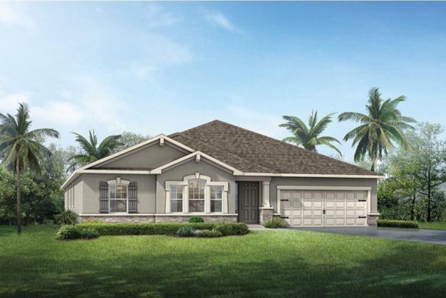 13252 Baby Belle Drive, Riverview, FL 33579 (MLS #T3159860) :: The Light Team