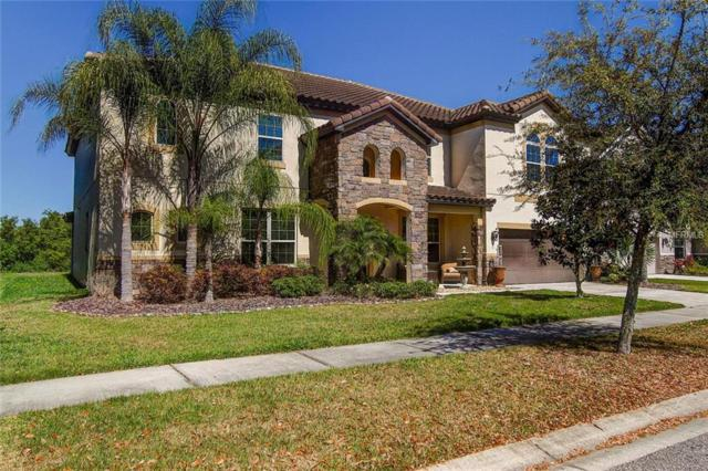 19315 Yellow Clover Drive, Tampa, FL 33647 (MLS #T3164389) :: Lovitch Realty Group, LLC