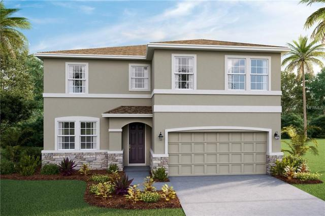 8401 Praise Drive, Tampa, FL 33625 (MLS #T3166394) :: The Duncan Duo Team